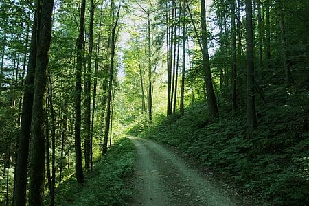 bosc, clar, verd, sol, camí del bosc, natura, arbres