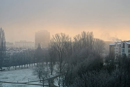 boira, boira, l'hivern, boira, Alba, gelada, fred