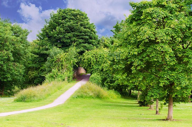 arbre, arbres, branca, branques, Parc, relaxació, temporada