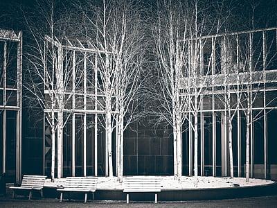 abedul, árboles, arte, Museo, instalación de arte, negro, blanco, ciudad