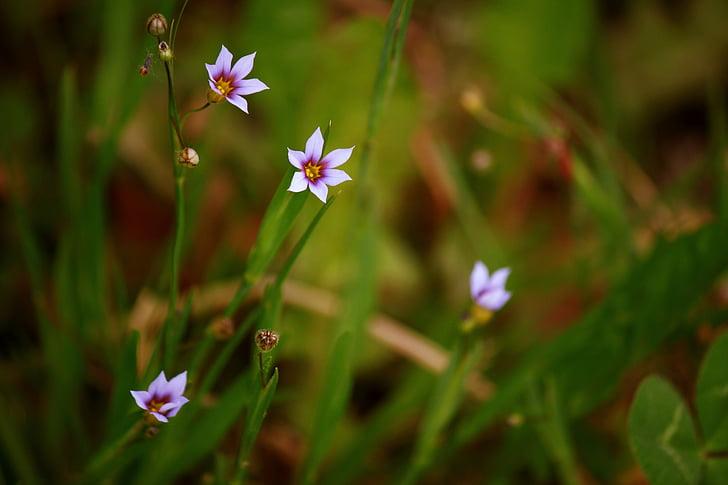 Blume, Wild, Wilde Blume, Natur, Blumen, Pflanze wildlife