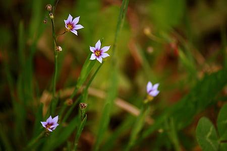 flower, wild, wild flower, nature, flowers, plant wildlife