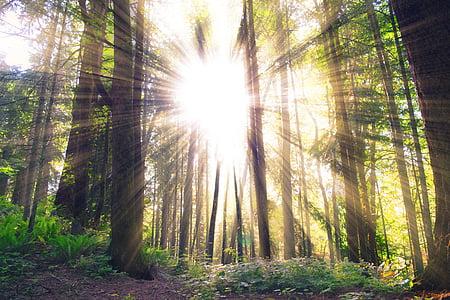 Slnečné svetlo, Forest, slnečné lúče, stromy, Woods, Príroda, Sunbeam