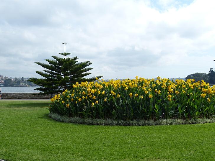 Sydney, Australië, botanische tuin, Park, Botanische, Flora, Tuin