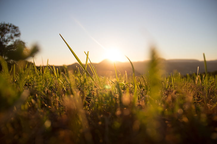 herbe, Meadow, Dim, vert, été, nature, paysage