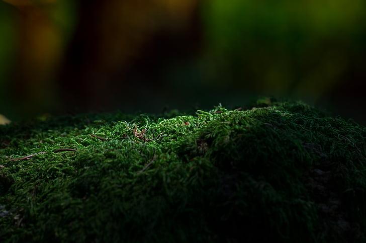 Lumut, hutan, hijau, lantai hutan, alam, cahaya dan bayangan, insiden cahaya