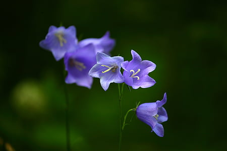 kellad, lilled, suvel, lilled välja, ere, lilled välja, ilus lill