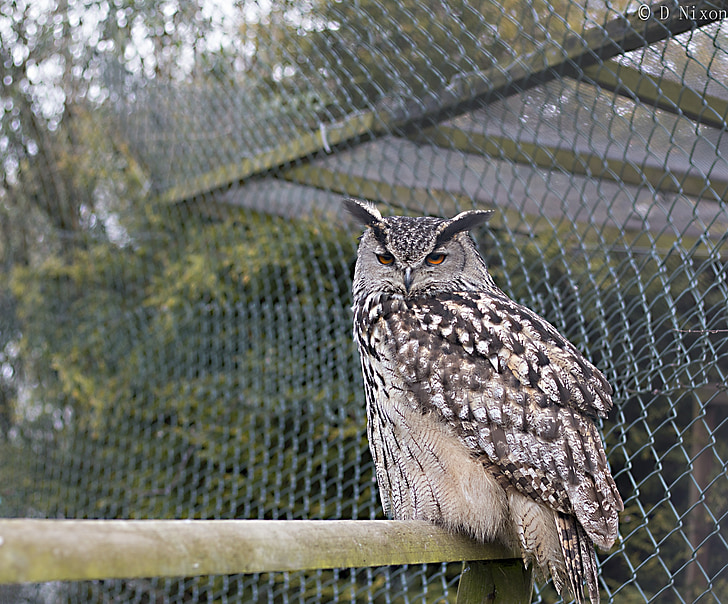 owl, bird, grey, beak, prey, animal, wildlife