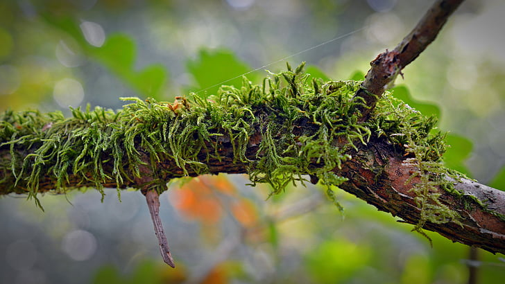 molsa, branca, natura, bosc, verd, teixit, branques