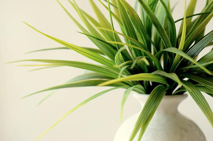 plant, ingegoten, decoratieve, groen, vaas, groeth, Tuinieren