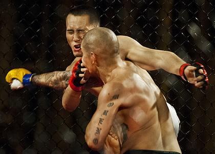 esport, atletes, boxa, lluita, cop de puny, lluitadors, mascles