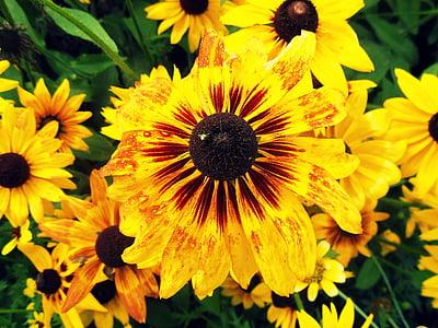 kollane, lill, loodus, taim, Makro, Aed, kollane lill