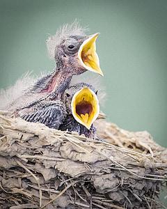 ocells, en niu, vida silvestre