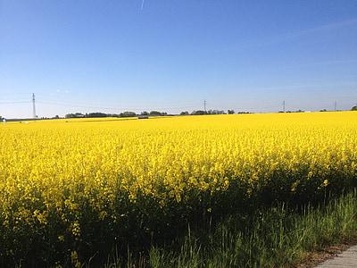 Kollane valdkondades, valdkonnad kuld, kuld, väli, Rootsi, kevadel, lilled