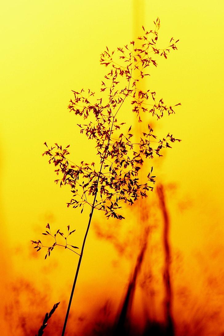 Gamta, siluetas, augalų, šviesos, šviesos ir šešėlių, geltona, Saulėlydis