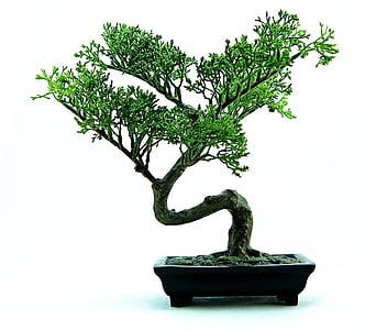Bonsai, strom, Zelená, rastlín, malé, Príroda, hrniec