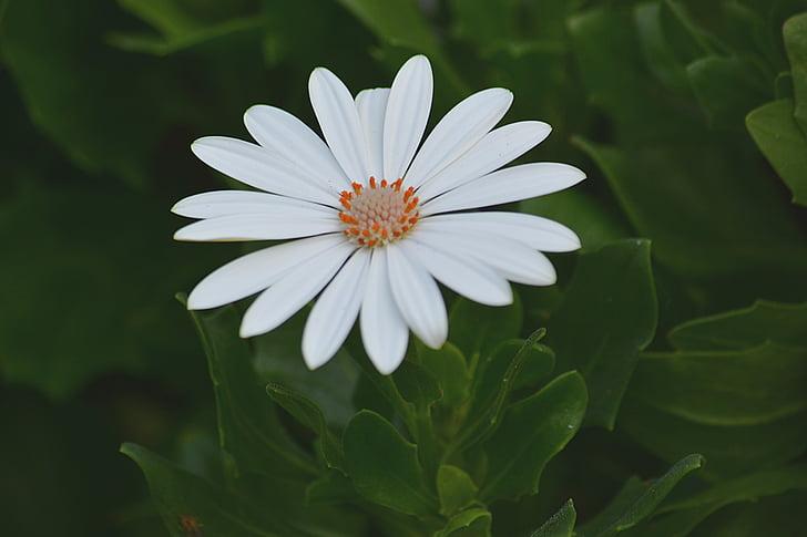 λουλούδι, βοτανική, χλωρίδα, φυτό, φυτά, φύση, Κήπος