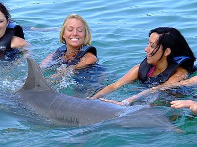 Dolfijn, zee, natuur, water, Oceaan, Marine, zwemmen