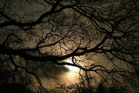 mørke, kveld, mørk, dystre, treet, natt, solnedgang