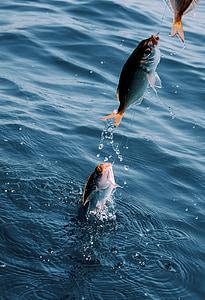 fish, catch, hook, lake, water, ocean, river