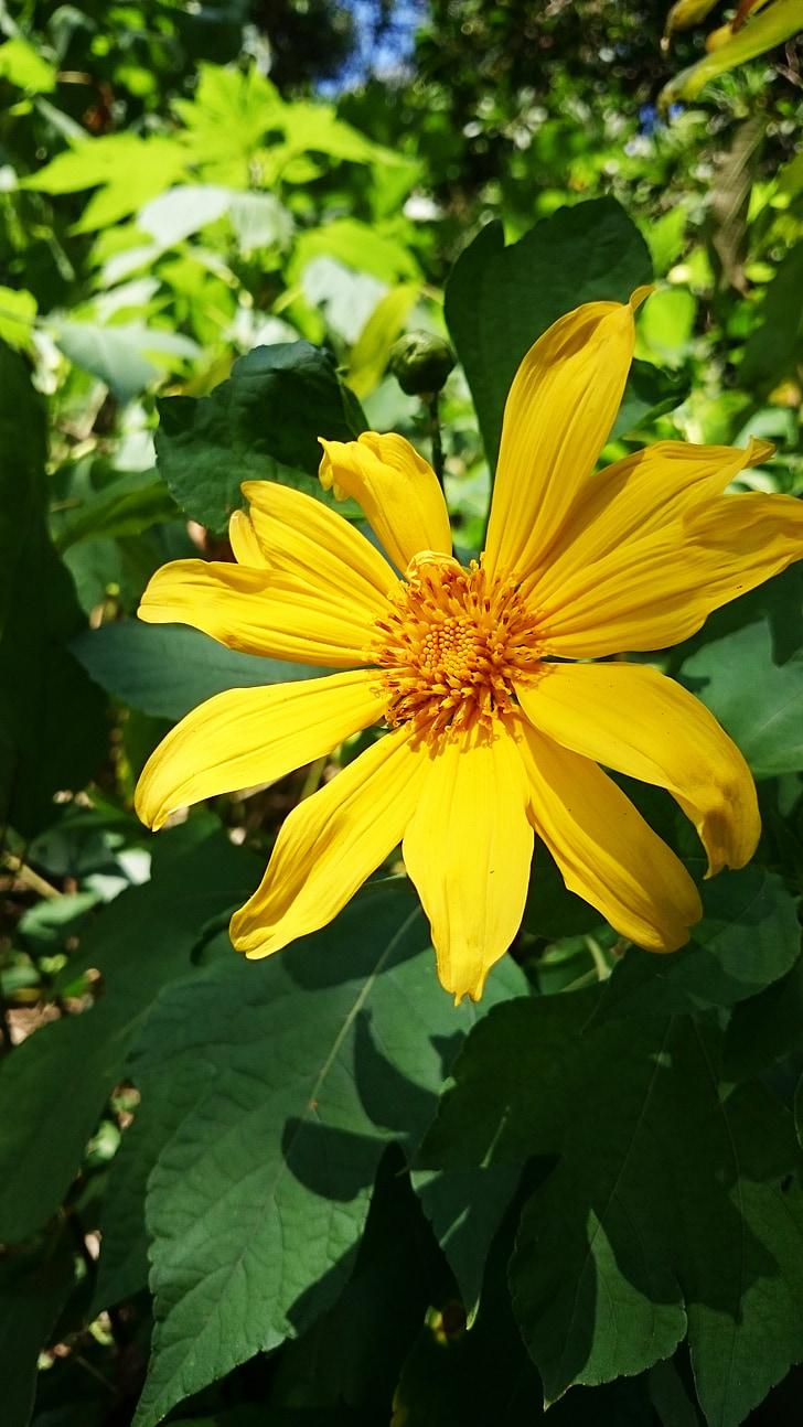 Foto Gratis Bunga Bunga Kuning Alam Taman Menutup Karangan
