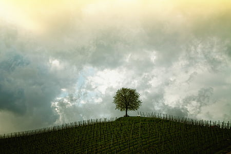 tree, hill, vines, landscape, mood, sky, field