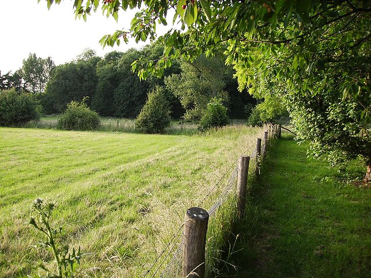 farm, field, about