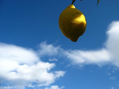 citron, agrumes, Espagne, fruits, agrumes, vitamines, fruits