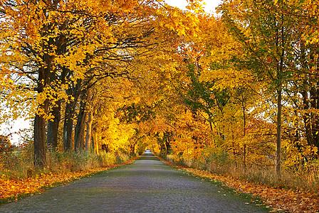 jesień, Avenue, drzewa, od, drogi, zadrzewionej alei, pozostawia