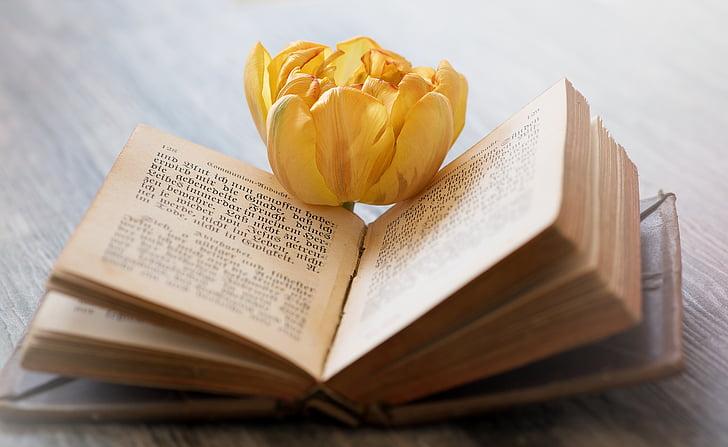 grāmatas, veco grāmatu, vecais, grāmatas lappuses, slīpo, fonts, zieds