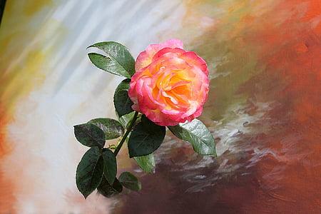 flor, Rosa, bodegons, rosa Rosa, Rosa, flor, flor