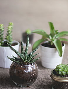 lá, màu xanh lá cây, thực vật, lọ hoa, nồi, Bình Hoa, Chậu cây
