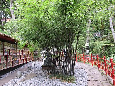 jardin de bambou, bambou, oriental, jardin japonais, Japonais, Zen, vert