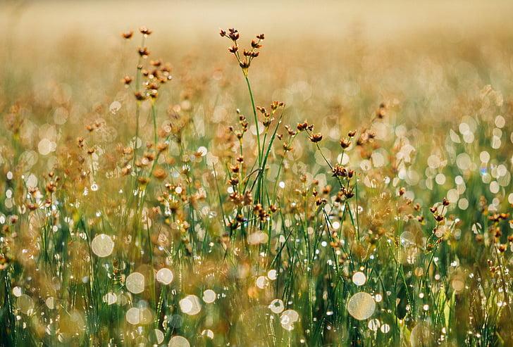 floral, fons, flor, equilibri, terra, natura, tranquil