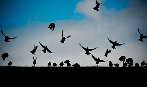 เงา, นก, มีเที่ยวบิน, เวลากลางวัน, บิน, สัตว์, สีเข้ม