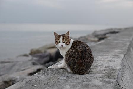 cat, suadiye, beach, istanbul, domestic Cat, pets, animal