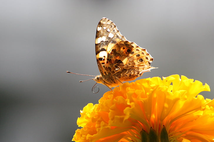 fluture, închide, macro, Flora, natura, înflorire crenguţă, lumea animalelor