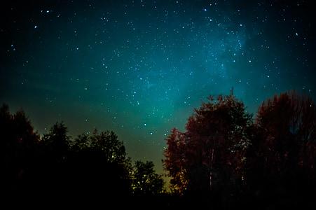 Droga Mleczna, gwiazda, noc, gwiaździste niebo, miejsca, galaktyki, lasu