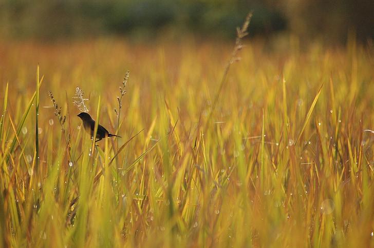 птица, сутрин, природата, диви, наблюдение на птици