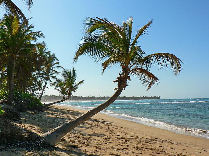 beach, tropics, sea, caribbean, coconut trees, shore, caribbean sea