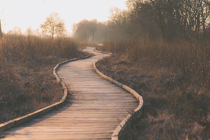 grama, paisagem, caminho, árvores, Ilha de madeira, o caminho a seguir, tranquilidade