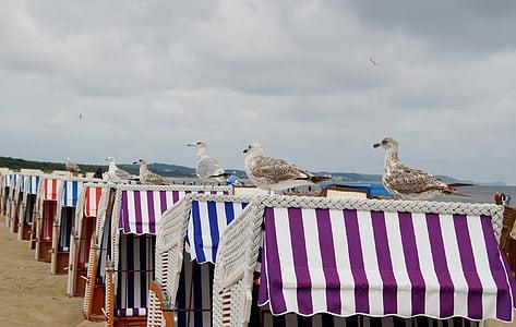 rackové, mořských ptáků, Baltské moře, pláž košíky, Racek