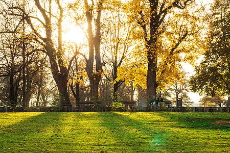 zachód słońca, jesień, Natura, lasu, nastrój, drzewa, leśna ścieżka