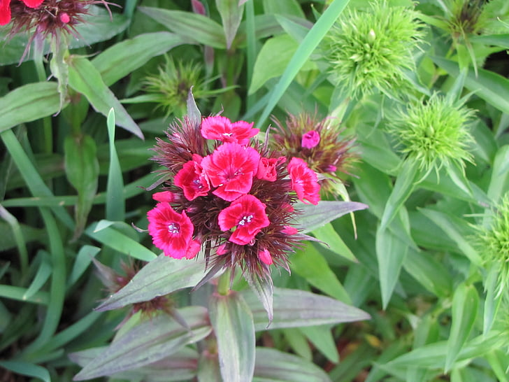 summer flowers, cloves, pink