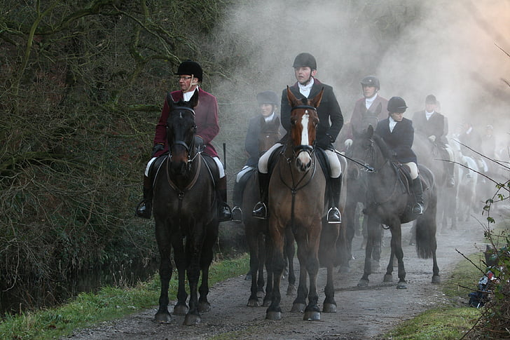 equestrian, countryside, rural, outdoor, mist, equine, horse