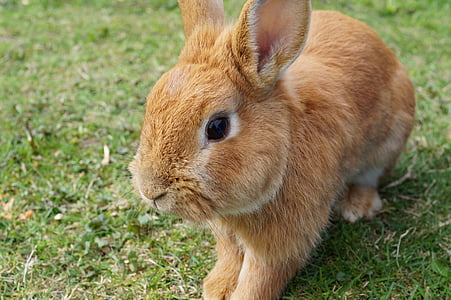 hare, rabbit, bunny, easter, cute, nager, easter bunny