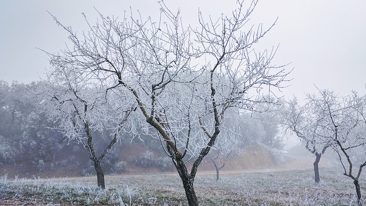 Frost, talvel, jõulud, puu, jää, Lumehelbed