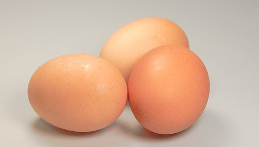 ous, aliments, ronda, marró, frescor, ou animal, Orgànica
