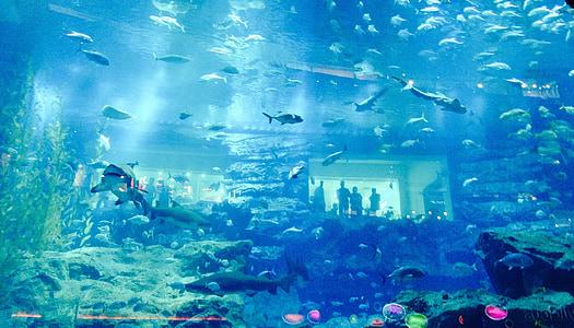 Dubai, Aquari, peix