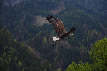 ruskea, valkoinen, Eagle, Flying, vihreä, Lehtinen, puut